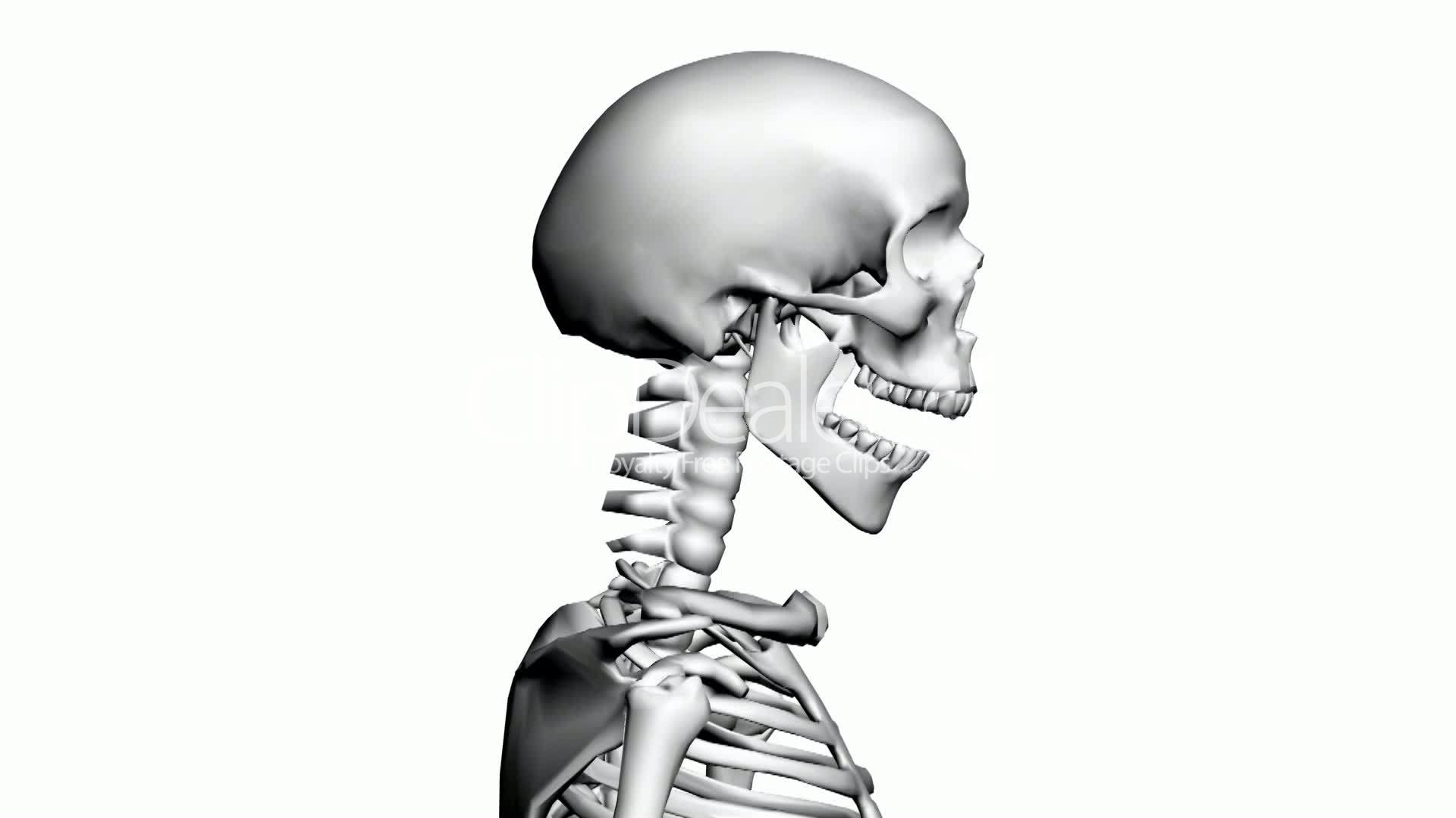 Rotation of 3D skeleton.anatomy,human,medical,body,skull,biology ...