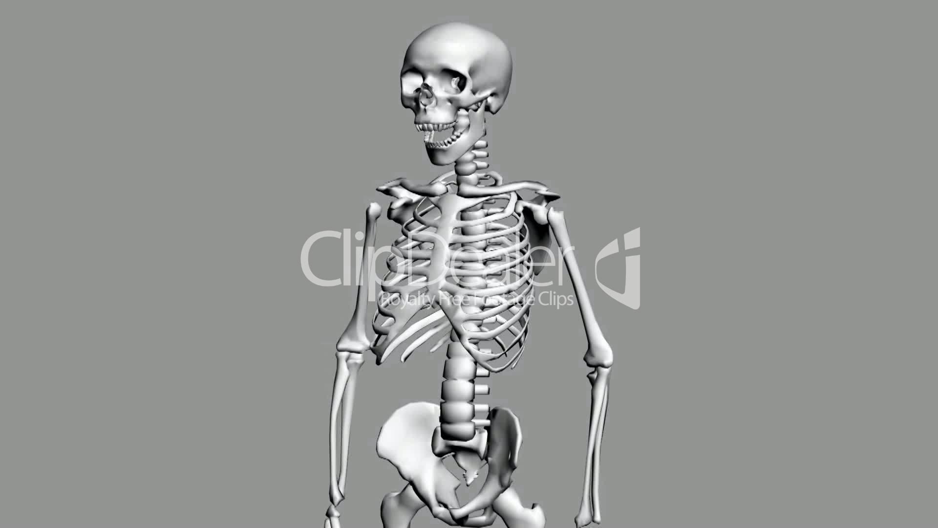 Rotation of 3D skeleton.anatomy,human,medical,body,skull,biology ...