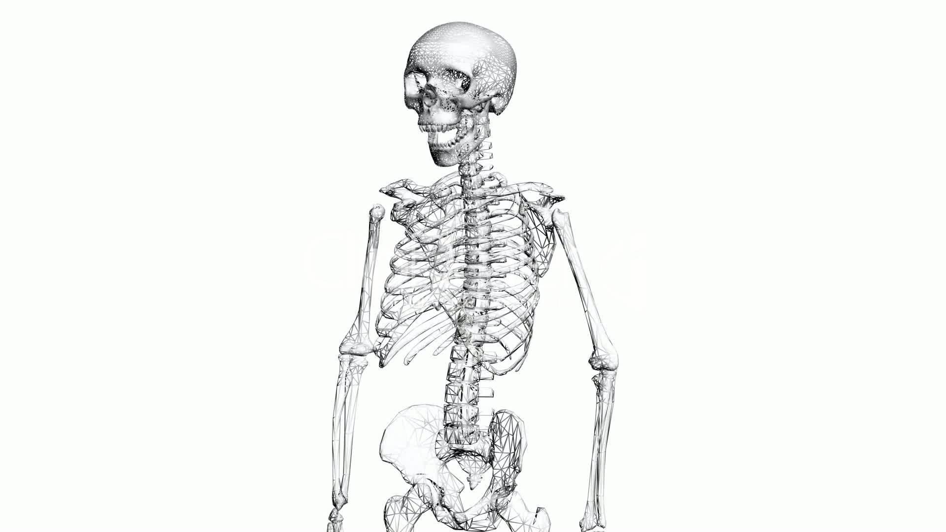 Rotation Of 3d Skeletonatomyhumanmedicalbodyskullbiology