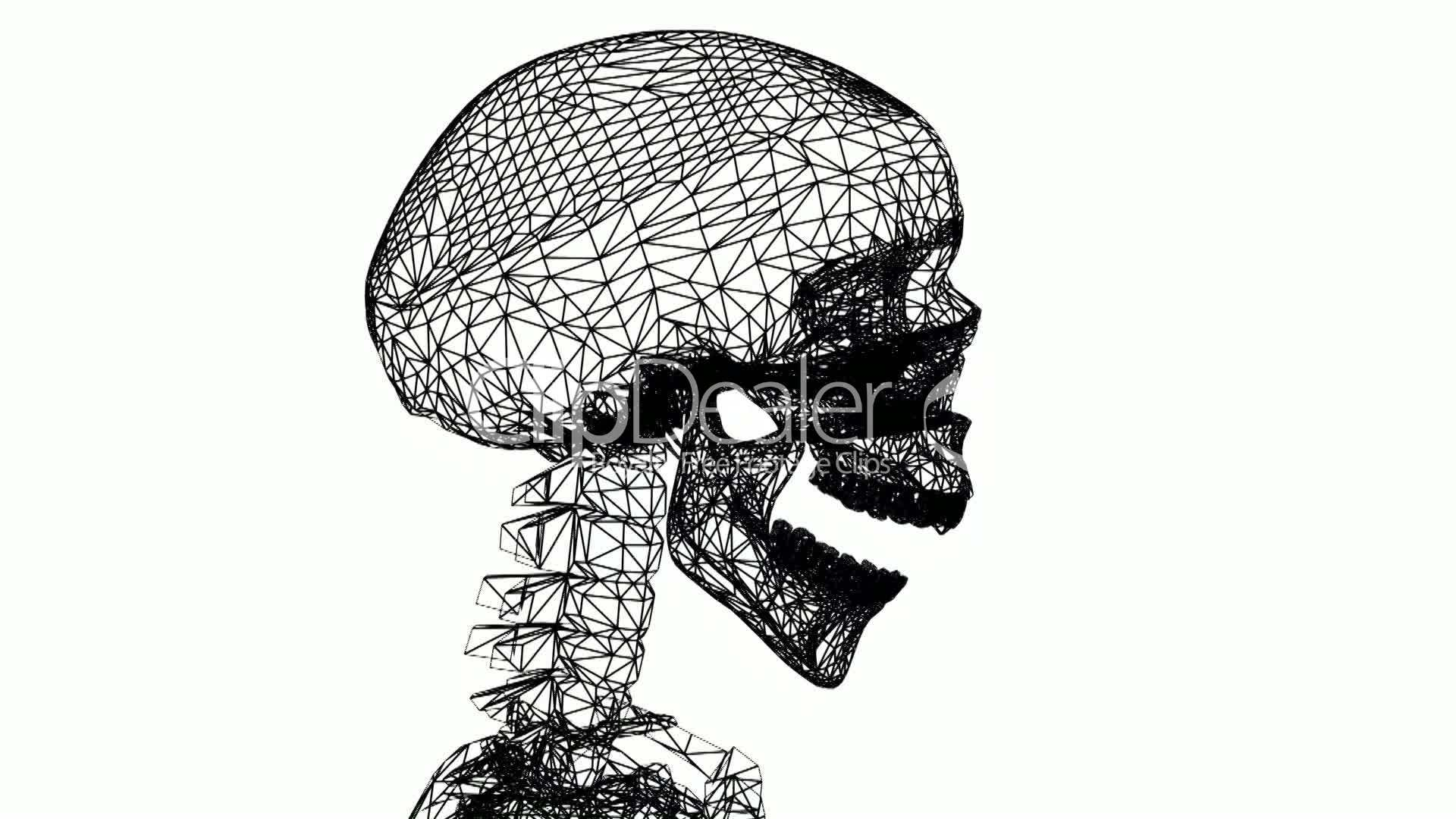 in the human skull biology essay Human biology 86(3) the relative role of drift and selection in shaping the human skull an essay toward an autobiography of a race concept.