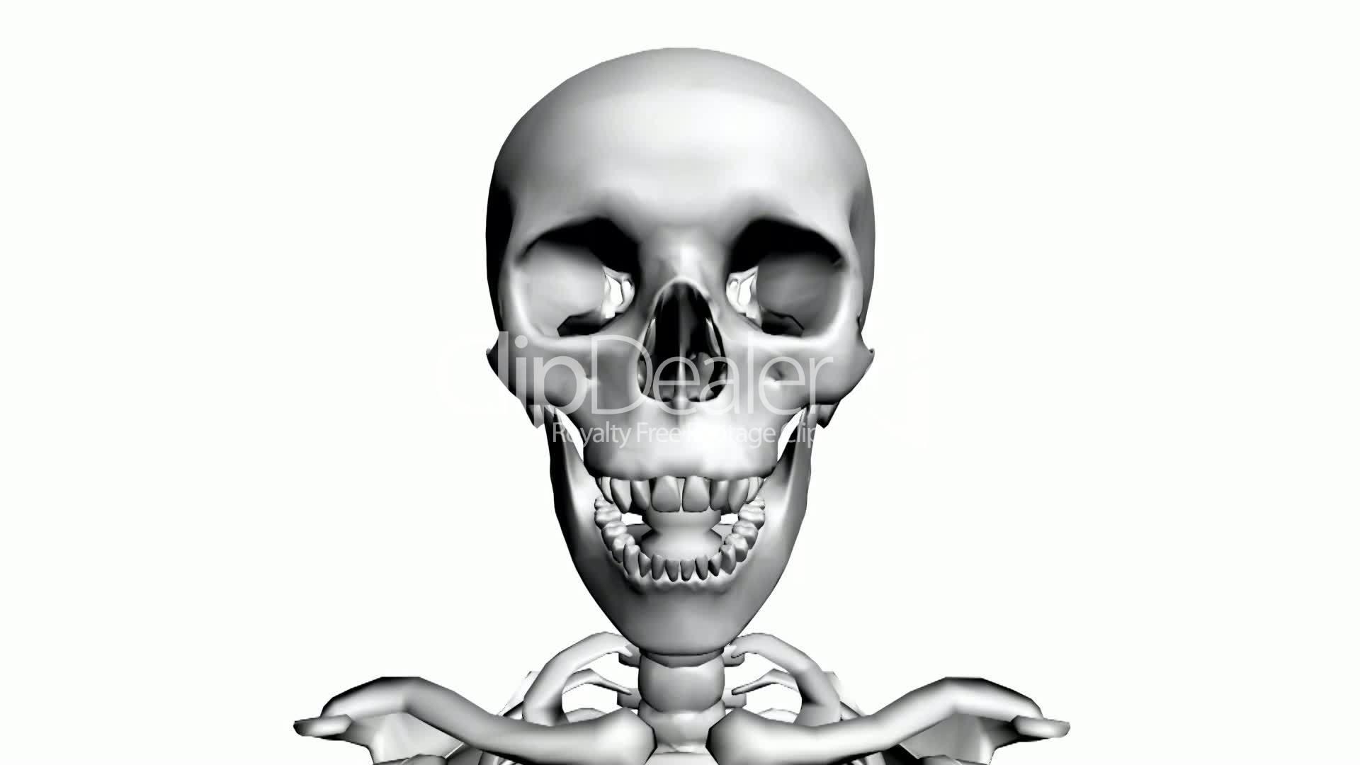 Moving of 3D skeleton.skull,anatomy,human,medical,body,biology ...