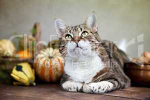 Herbstbild mit Katze