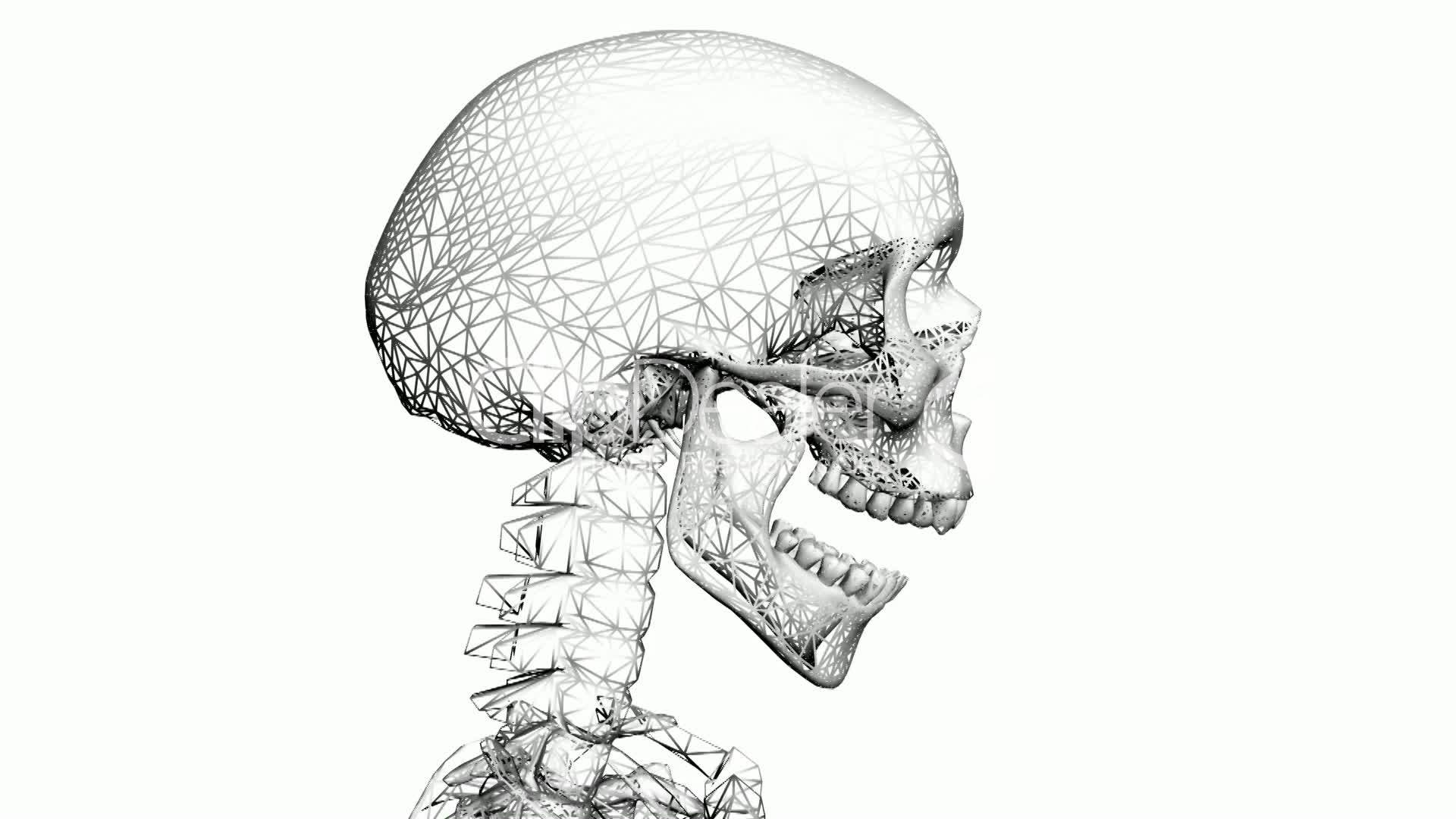 Moving Of 3d Skeletonatomyhumanmedicalbodyskullbiology