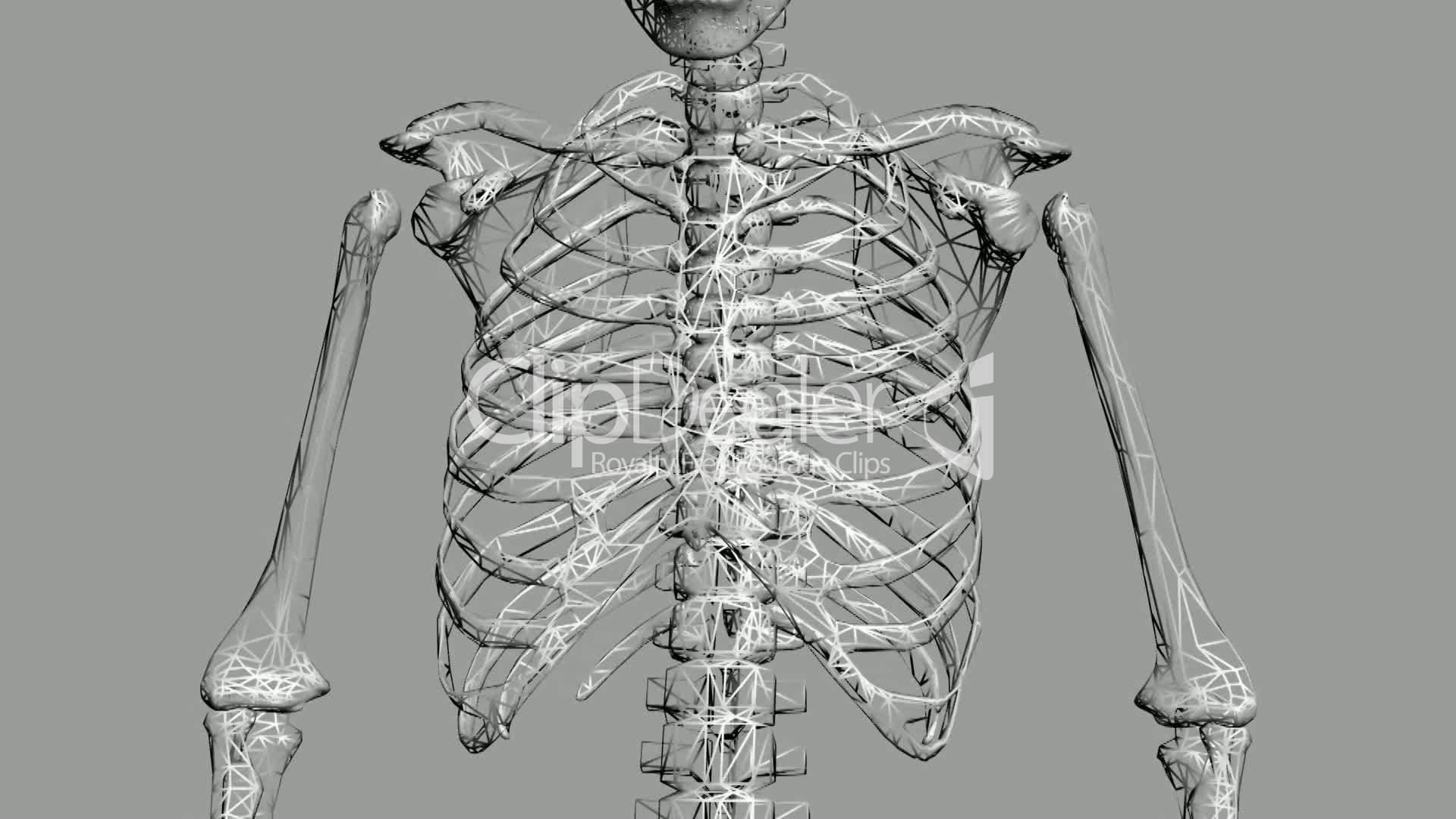 Rotation of 3D skeleton.ribs,chest,anatomy,human,medical,body,skull ...