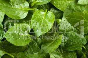 Spinach  background