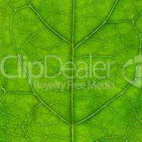 Leaf of a plant