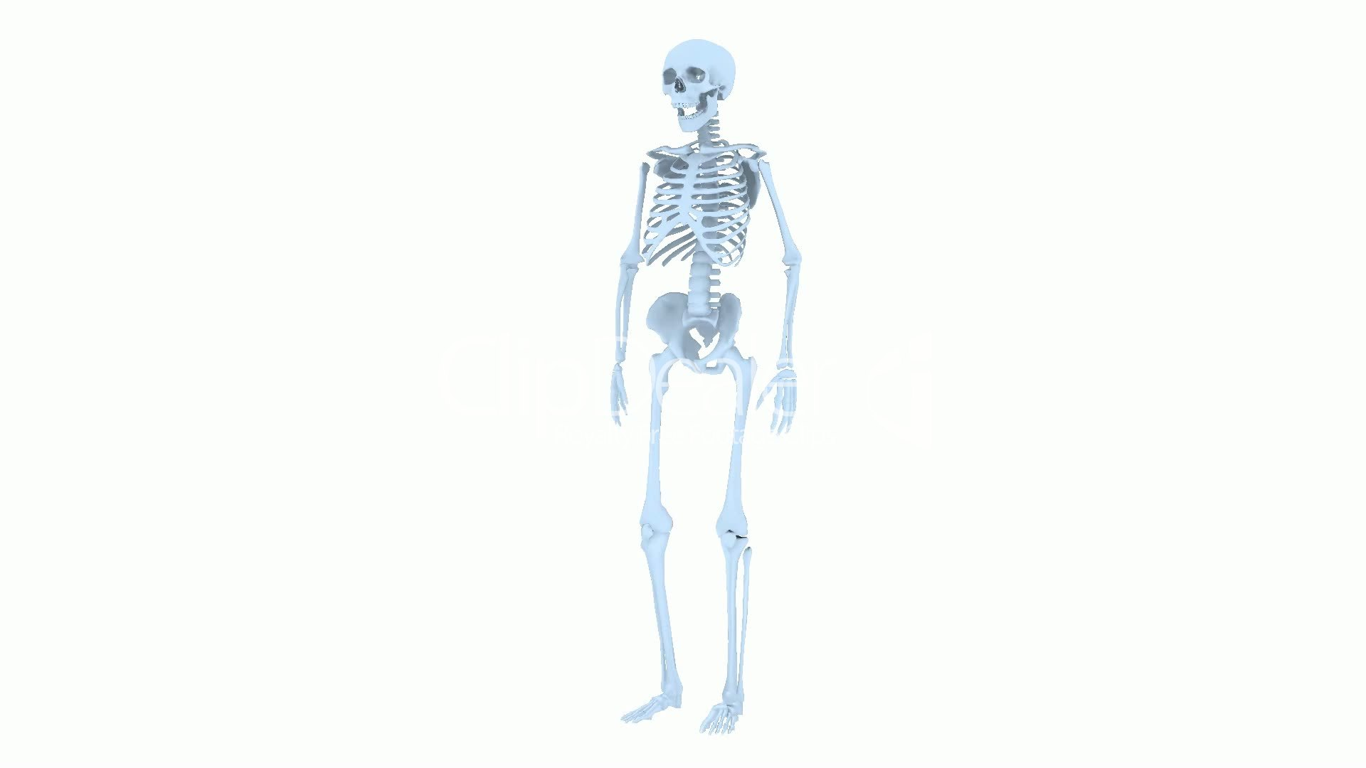 Rotation of 3D skeleton.skull,anatomy,human,medical,body,biology ...