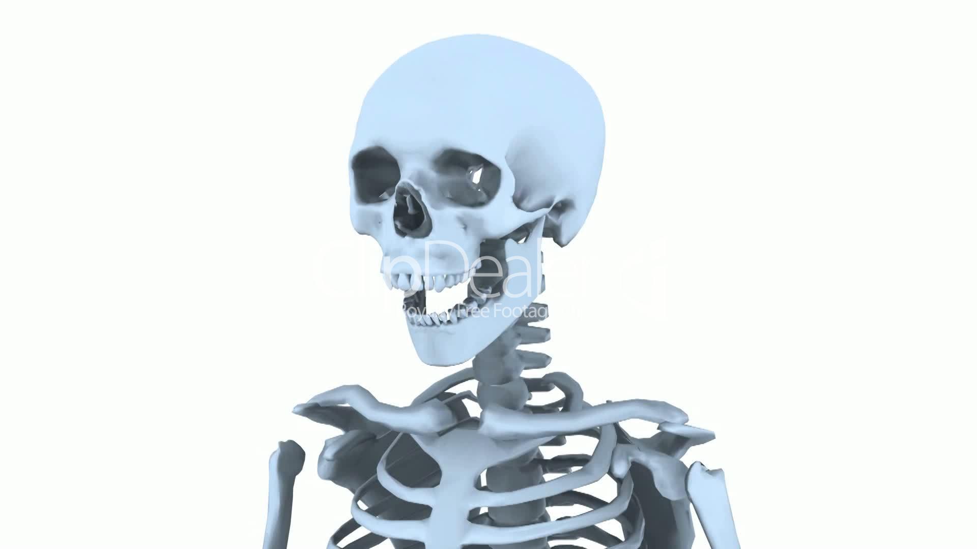 Rotation of 3D skeleton.skull,anatomy,human,medical,body,biology ...