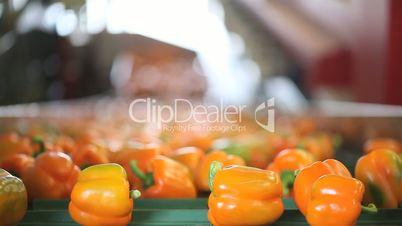 peppers on conveyor