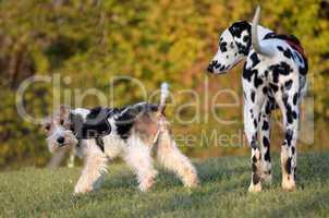 Hund Wolfsspitz Hundesport Hundeschule