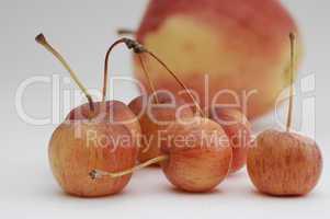 Zieräpfel im Hintergrund Elstar