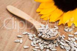 Sonnenblumenkerne - Sunflower Seed