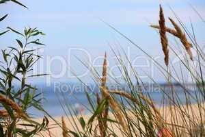 Blick durch Dünengras auf Strand / Looking through dune grass on beach