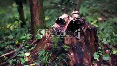 Tree Stub And Bark