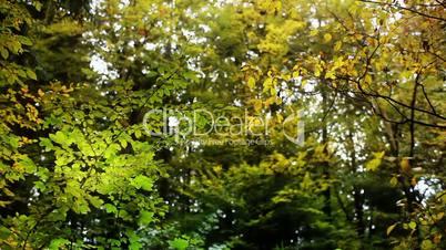 Tree Leaves Spot Lights Background
