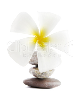 Frangipani on therapy stones