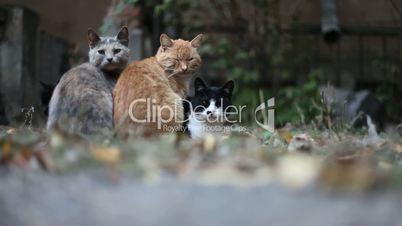Four Urban Cats.