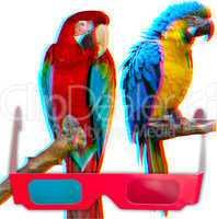 Parrots in 3D