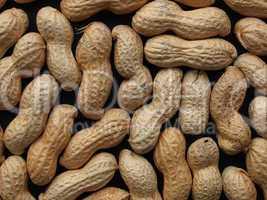 Peanut picture