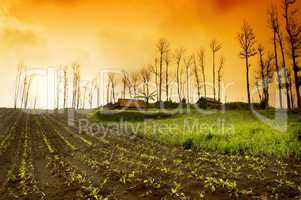 Farmland Sunrise