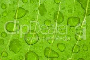 water-drop on a green leaf