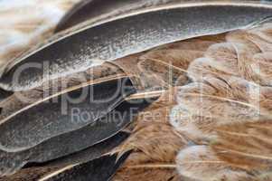 Macro feathers