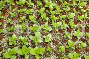 greenhouse ..