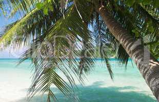 Tropical scene.