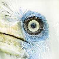 bird eye closeup .