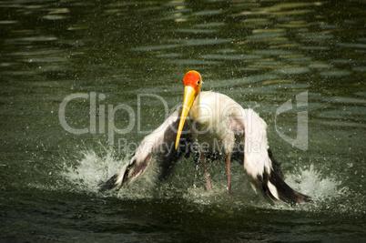 stork ..