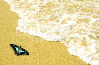 blue butterfly on golden sand beach