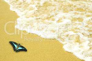 blue butterfly on golden sand beach