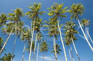 Palm trees against blue sky at seaside