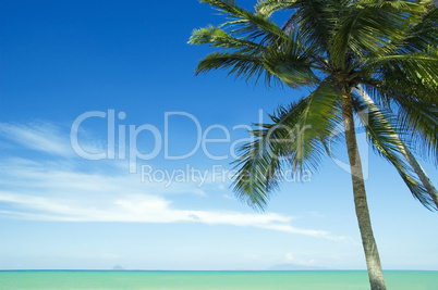coconut tree and beach