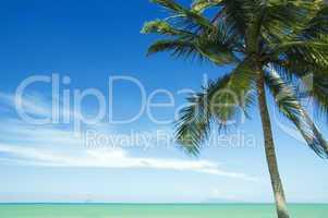 coconut tree and beach