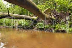 Brücke der Baumstämme