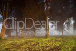 Dunkle Bäume im Nebel