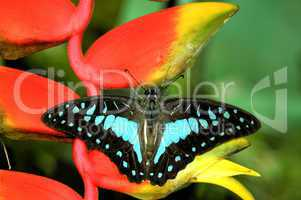 butterfly resting on plant