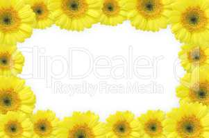 flowers frame (gerbers)