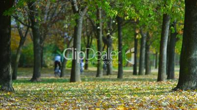 Autumn park people walking and drive bike