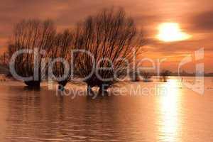 Weiden im Hochwasser