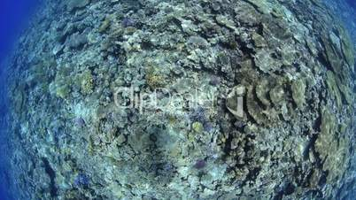 Fish Eye view of a Pristine hard coral reef