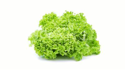 green salad lollo loopable