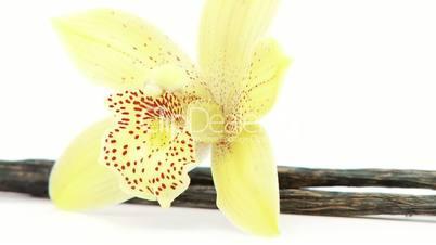 single flower with vanilla closeup