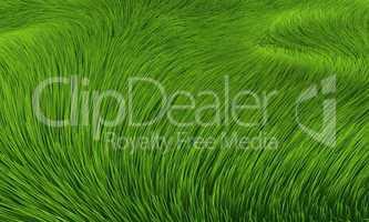 Wind im Gras - Hintergrund
