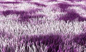 Wilder Teppich - Violett Weiß
