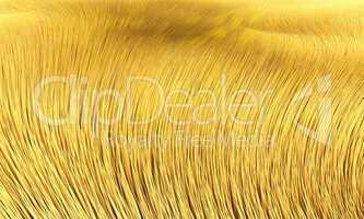 Hintergrund - Goldenes Fell