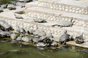 Turtles on stairs in a temple