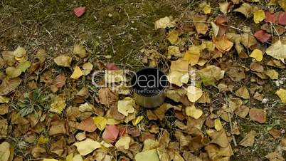 pour water in mug on falling yellow leaves,travel material.