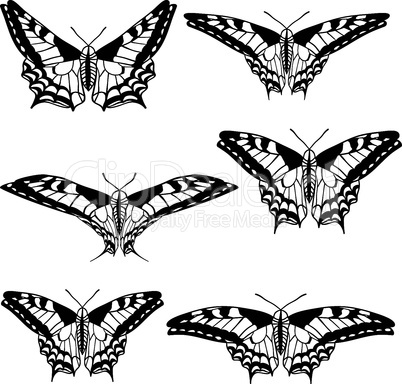 Vector set of beautiful butterflies.